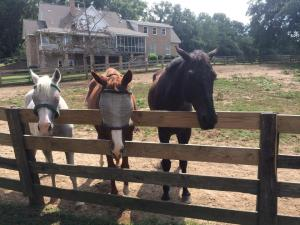 Trader and his new buddies!